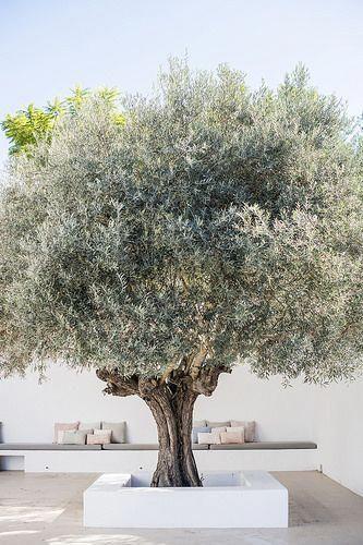 mediterrane tuin ideeën